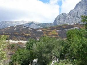 abgebrannter wald, makarska,kroatien